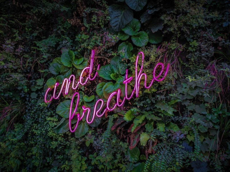 "leafy green background with pinkish-purple ""just breathe"" overlay"
