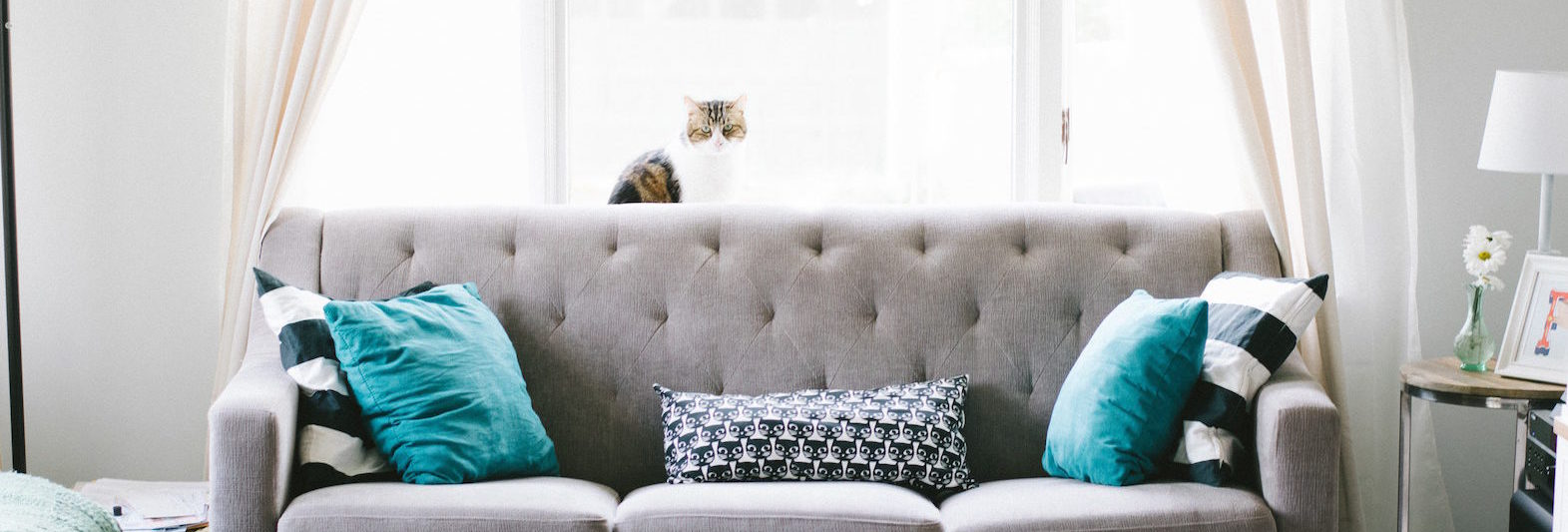 grey couch in front of sunny window with cat perched in it